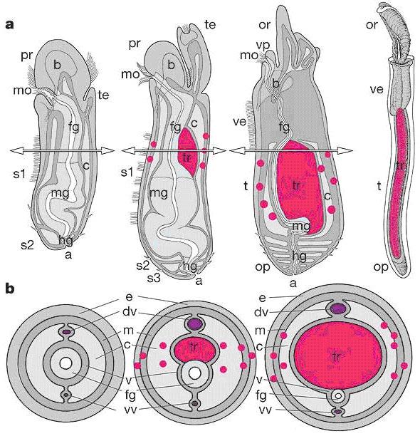 Бактерии: места обитания.  Клетка - элементарная часть организма, способная к самостоятельному существованию.