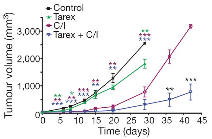 <b>Рис.7.</b> Рост опухолей умышей после трансплантации раковых клеток МКРЛ от пациента
