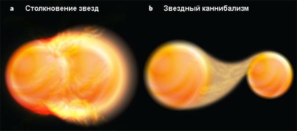 В соответствии с теорией звездной эволюции аномально массивные звезды— так называемые «голубые отставшие звёзды»— взвездных скоплениях могут возникать двумя разными путями: a— врезультате столкновения звезд; b— врезультате звездного каннибализма. Рис. из обсуждаемой статьи Melvyn B. Davies