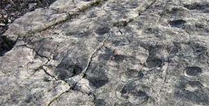 Так выглядит каменная поверхность со следами. Фото ссайта news.nationalgeographic.com