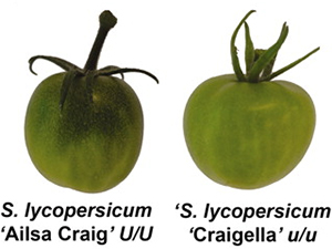 uniform_ripening_fig1_300.jpg