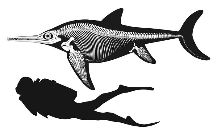 Три ихтиозавра из Англии, Канады и России оказались близкими родственниками