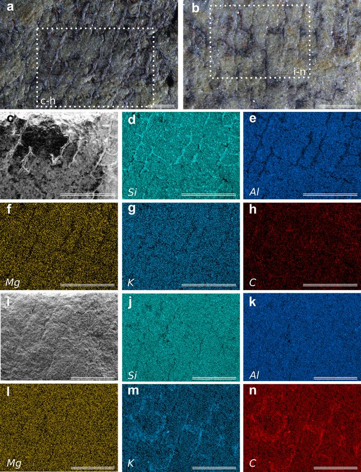 Рис. 4. Элементный состав скелета губки из семейства Verongiidae и вмещающей породы