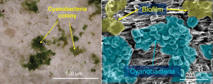 Цианобактерии Chroococcidiopsis могут извлекать воду прямо из минералов
