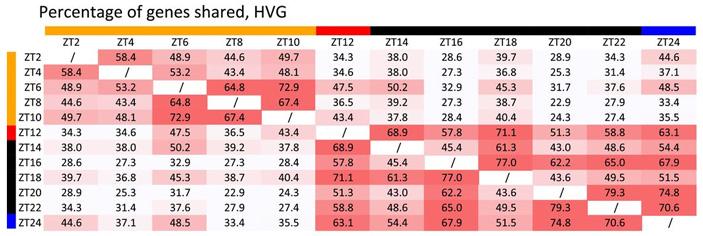 Рис. 4. Процент общих HVG для разных пар временных точек