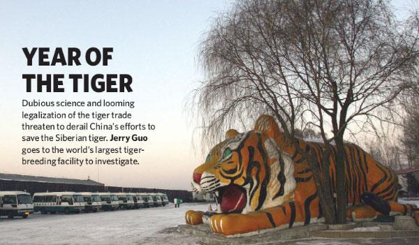 Вход в «Тигровый парк» в Хэндаохэцзы около Харбина (Китай). Этим снимком открывается статья Джерри Гуо «Год тигра» вжурнале Nature. Подзаголовок гласит: «Сомнительная наука и проглядывающая легализация «тигровой» торговли угрожает свести нанет усилия Китая по сохранению амурского тигра. Джерри Гуо посетил крупнейший центр по разведению тигров»