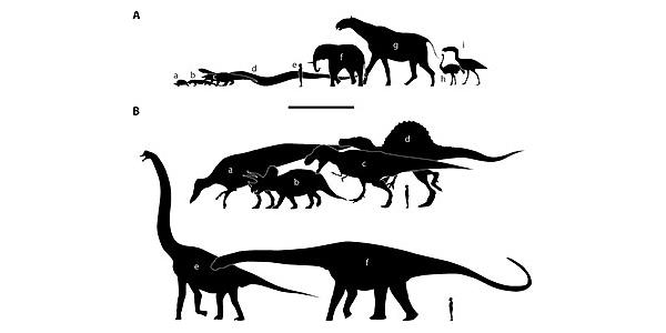Крупнейшие представители вымерших и существующих групп наземных позвоночных (два нижних— завроподы)