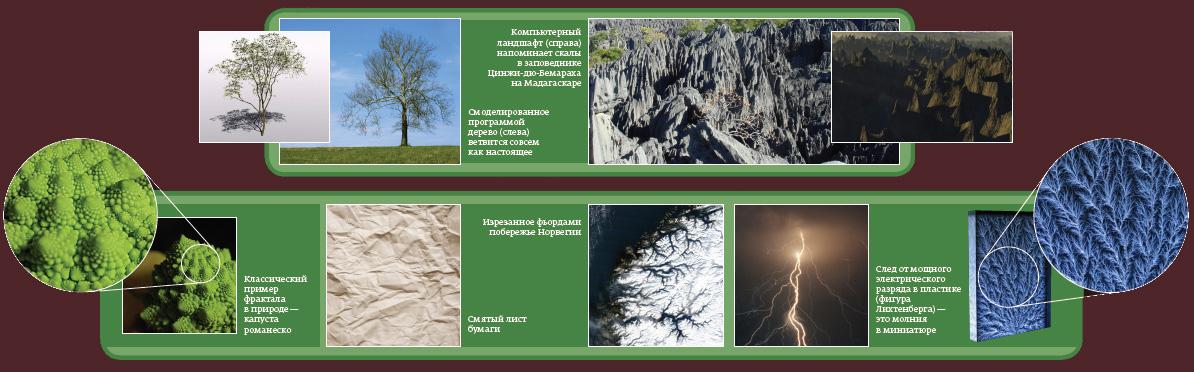 Фракталы в природе доклад 3768