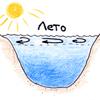Характер циркуляции водных масс и вертикальные температуры в небольшом, но глубоком озере средней полосы. Рис. А.Гилярова