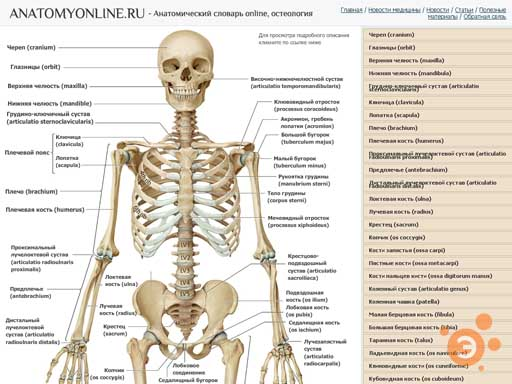 Практическая анатомия с ботаничкой