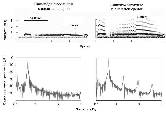 Роль замкнутого пищевода как фильтра высокочастотных гармоник