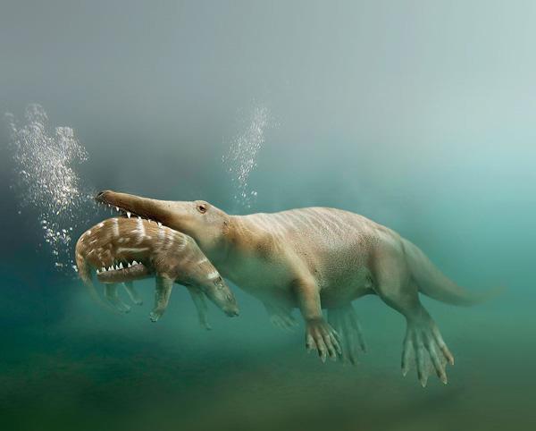 Найденный в Пакистане «шагающий кит плавающий» (Ambulocetus natans) в представлении художника