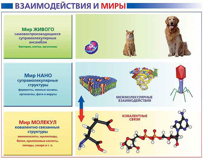Рис. 9. Усложнение структуры в биологическом мире. Изображение: «Экология и жизнь»