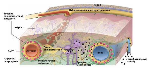 Занятия спящего мозга