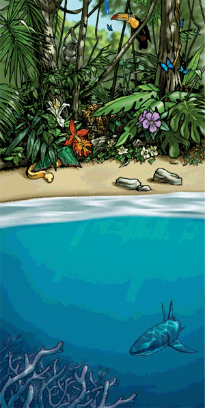 Рисунок M. Twombly из обсуждаемой статьи в Science, схематично показывающий контраст между видовым богатством суши и бедностью океана. Credit: M. Twombly/Science