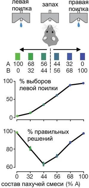 Рис. 1. Общая схема эксперимента. На верхнем графике показано, скакой частотой одна из крыс выбирала левую поилку при шести разных составах пахучей смеси (100:0, 68:32, 56:44, 44:56, 32:68, 0:100). Нижний график показывает, скакой частотой три произвольно выбранные крысы принимали «правильные» решения. Рис. из обсуждаемой статьи вNature