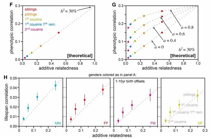 Рис. 1./b Корреляции между кровными родственниками по продолжительности жизни